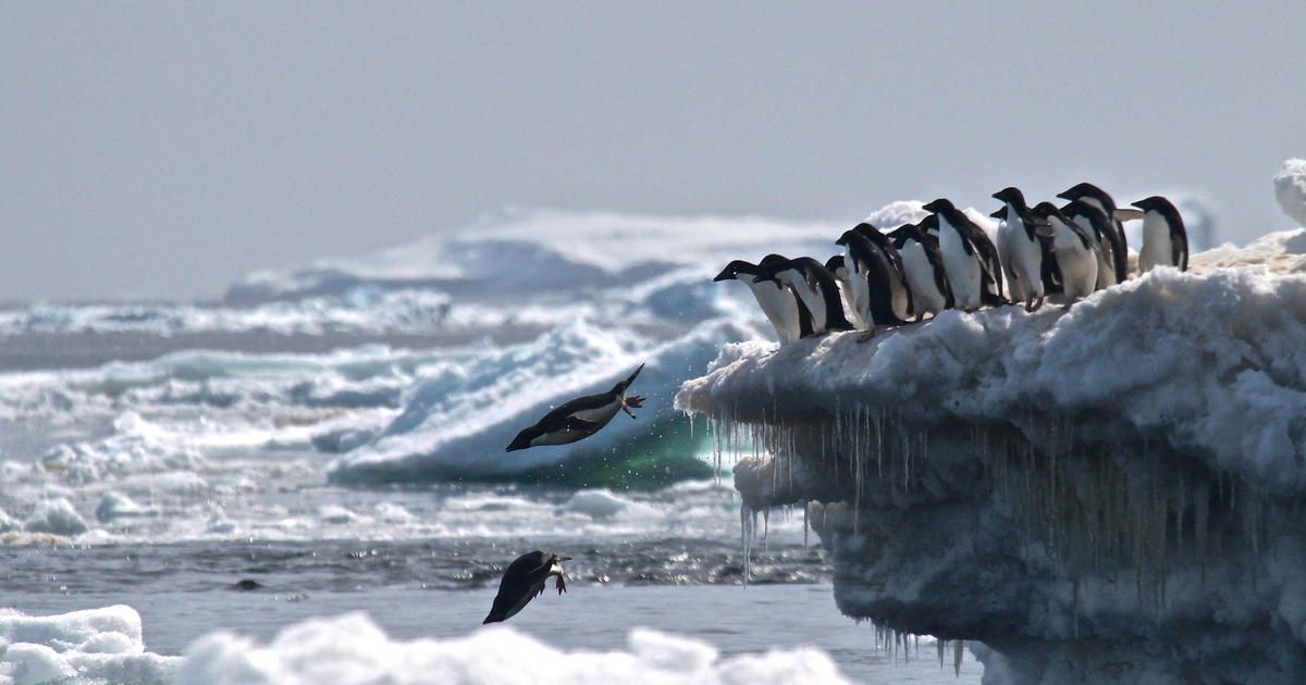 Unexpected discovery of #AdeliePenguin colonies leads to bigger question of greater marine protection in East Antarctica.  https:// buff.ly/2FOgWEe  &nbsp;  . #Antarctica #Antarctica2020 #MarineProtectedArea <br>http://pic.twitter.com/yJ3PBRdZPt