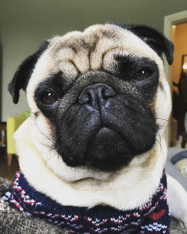 Pug lovers dating site