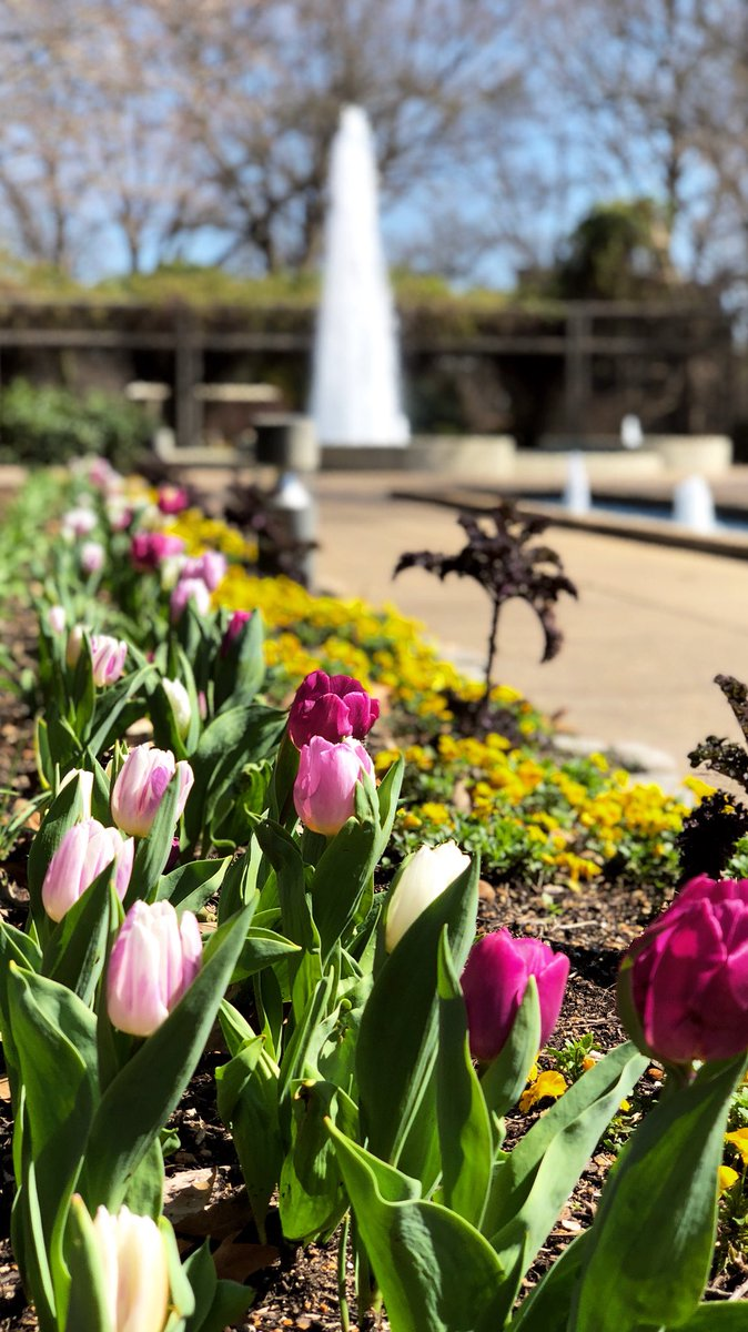 Good Morning, Memphis! Itu0027s A Wonderful Day To Visit The Garden, And See  All Of The Beautiful Signs Of Spring! #memphisbotanicgarden #tulips  #daffodils ...