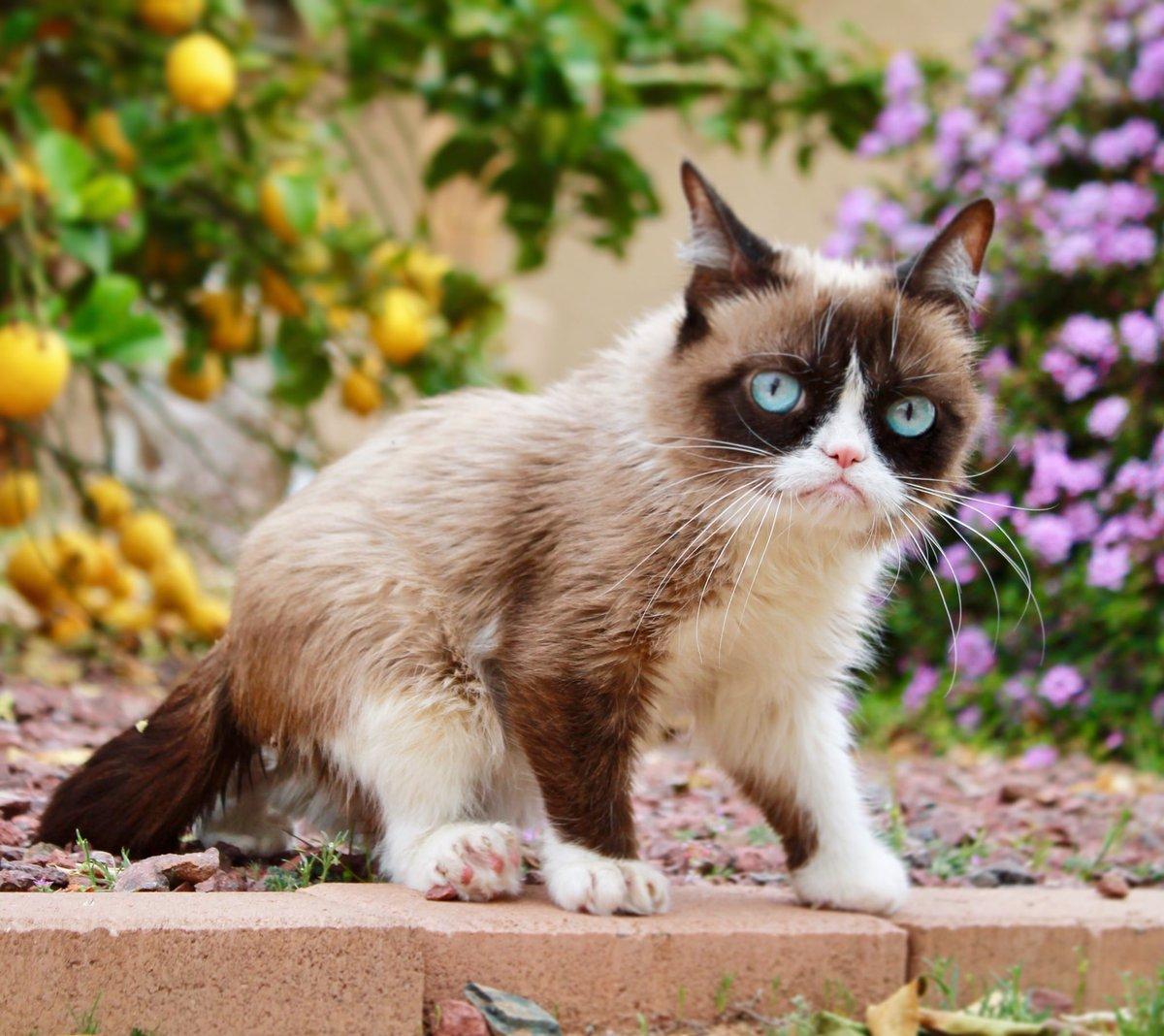 Grumpy Cat (@RealGrumpyCat) on Twitter photo 2018-03-05 10:00:38