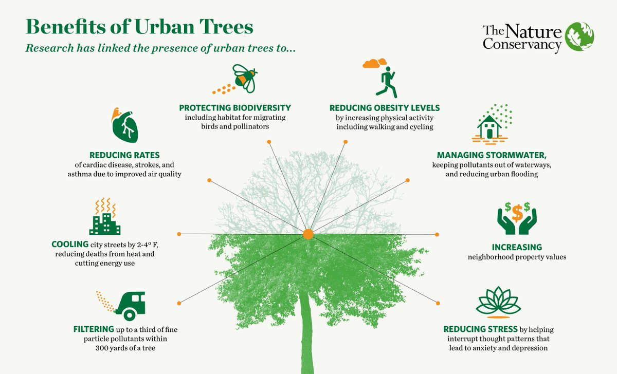 The benefits of urban trees 🌳🌳 via @nature_org #urbantrees #streettrees