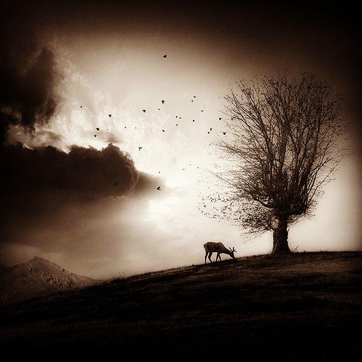 'ağaç' diyor şair 'kendisinden havalanan...