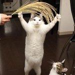 これで次の収穫も安心!?五穀豊穣の猫神さまがどことなく神々しい
