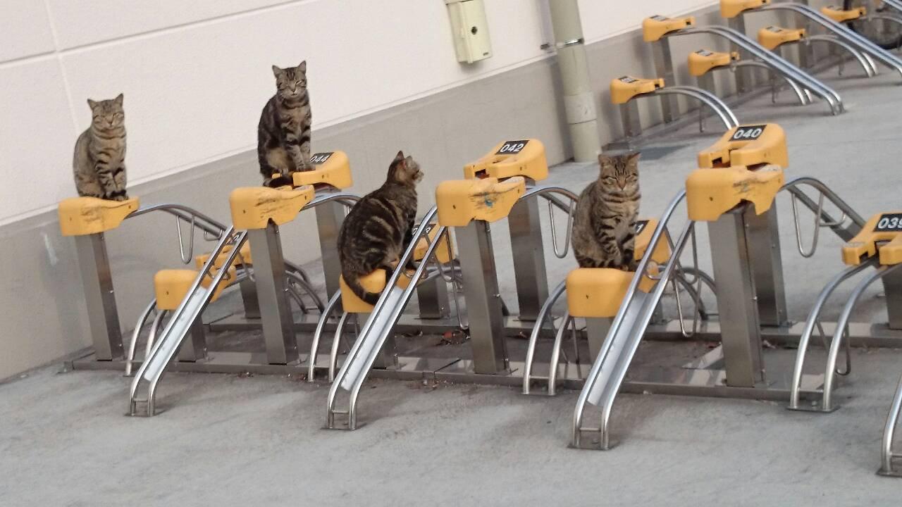 田舎のヤンキーかよw自転車とめたいのに猫がたむろっててできないw