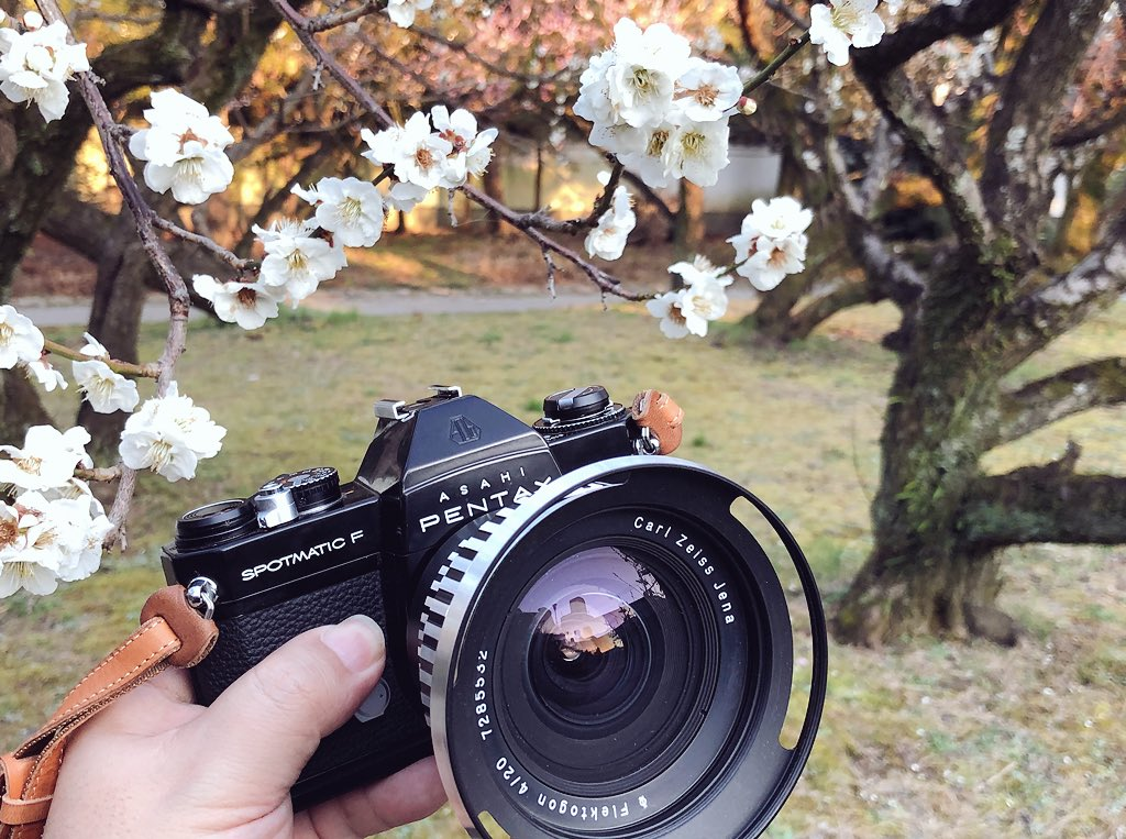 今年初の梅の花を撮って来ました(*´∇`*) #今日のカメラ  #PentaxSPF  #CarlZeissJena  #Flektogon20mm f4