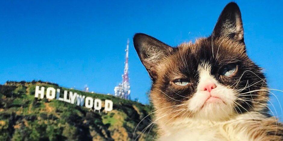 Grumpy Cat (@RealGrumpyCat) on Twitter photo 2018-03-05 09:59:55