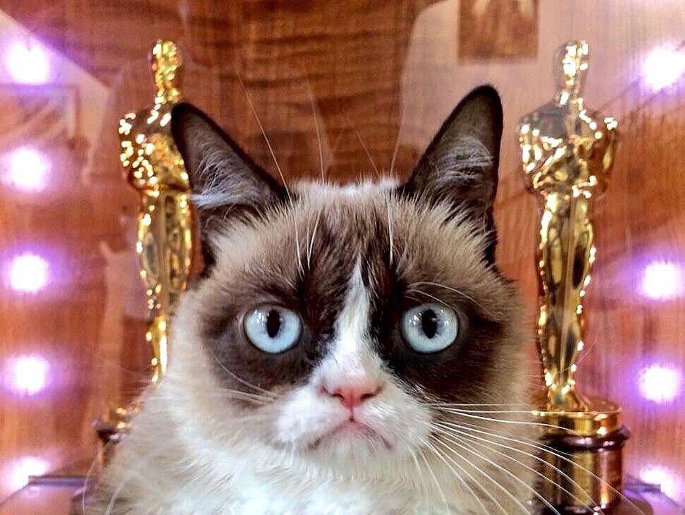 Grumpy Cat (@RealGrumpyCat) on Twitter photo 2018-03-05 10:01:54