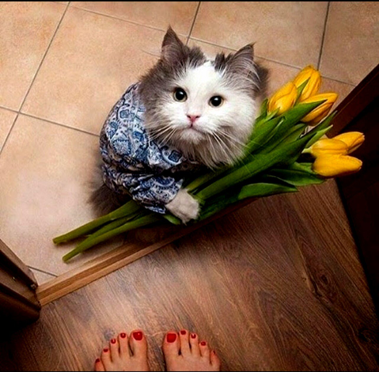 8 марта картинки котята, открытки