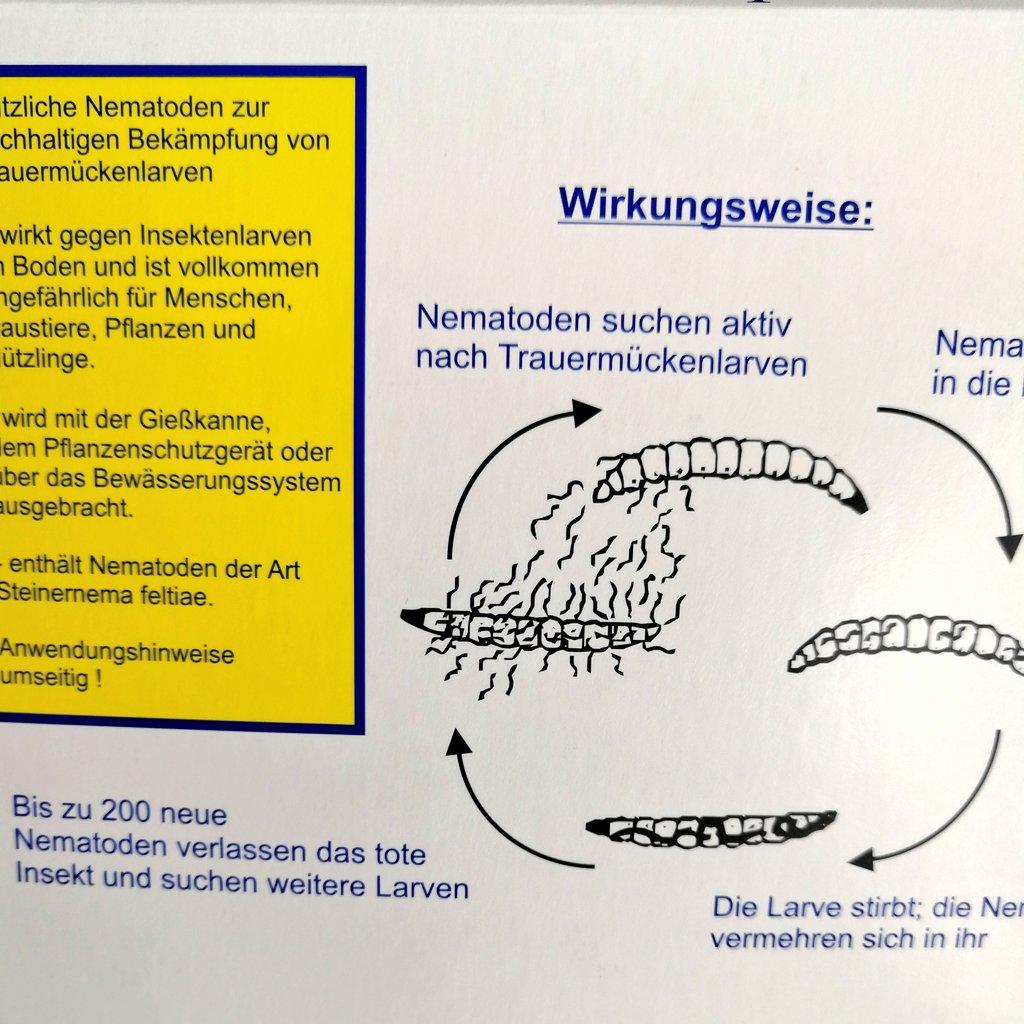 Stechmücke Im Zimmer : stechm cke im zimmer finden wohn design ~ Bigdaddyawards.com Haus und Dekorationen