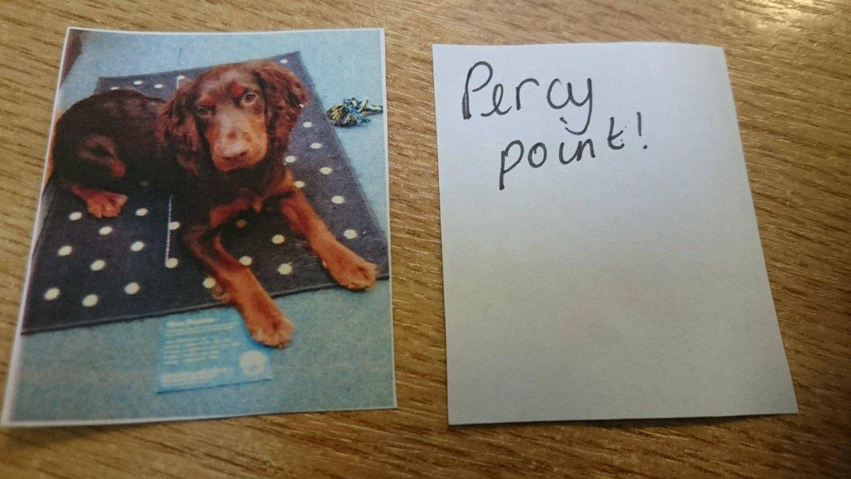 Countesswearschool On Twitter Percytheschooldog Countesswearsch
