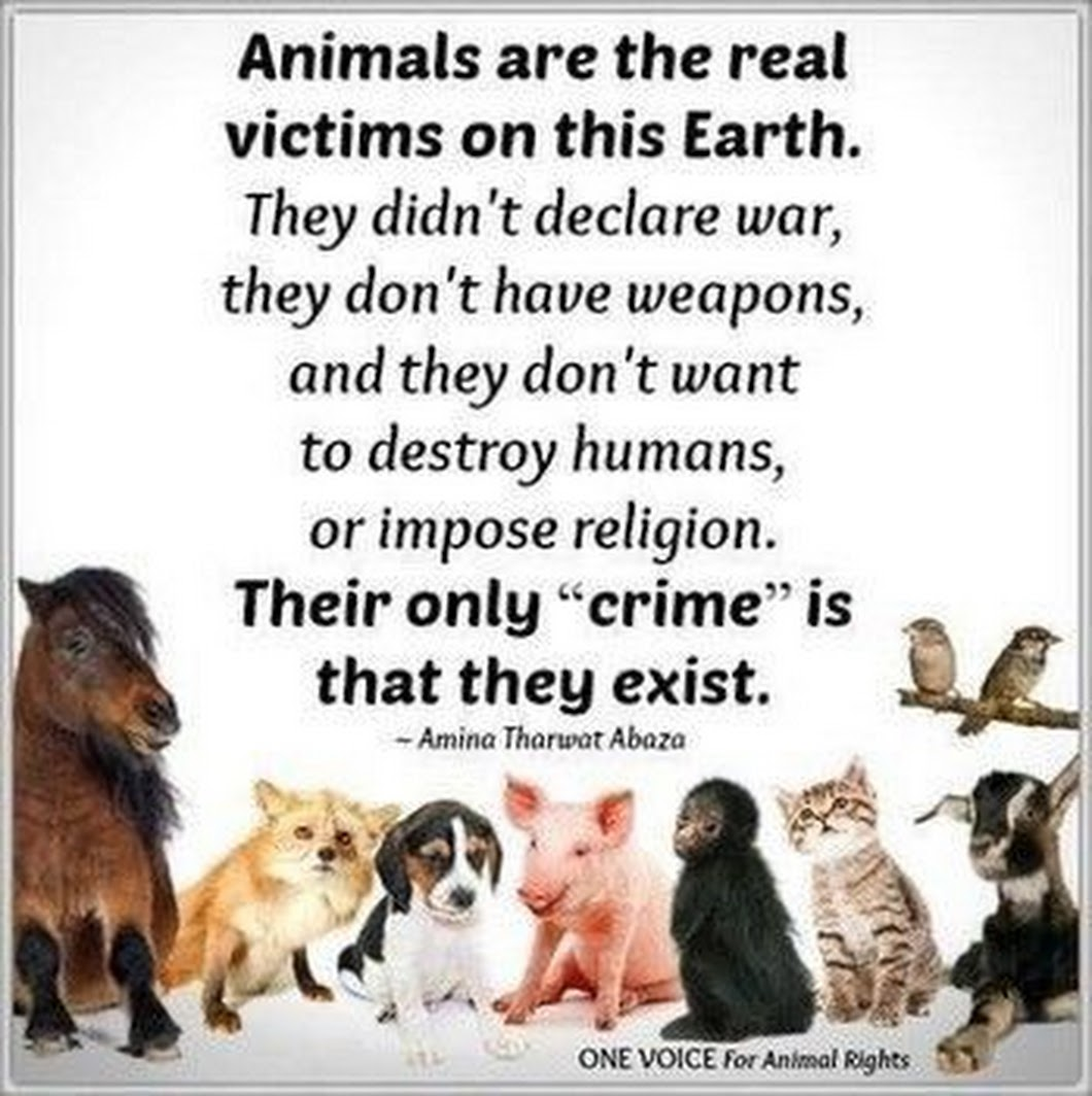 #Love #Animals #Anipals #Vegan #FBR      ❤️🐾 Animals are the real victims   on this Earth. They didn't declare war        they don't have weapons, and ....       ❤️ 🐴 🐶 🐷 🐒 🐯 🐐 ❤️ https://t.co/w9gwYoovob