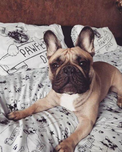 french bulldog duvet cover asda