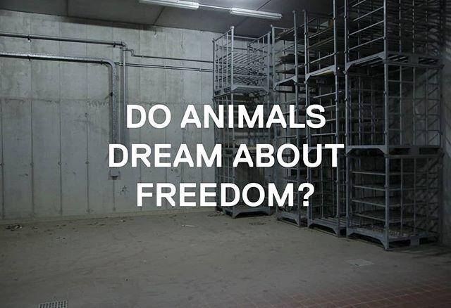 #IgorGrubic #DoAnimalsDreamAboutFreedom #billboardart #AnimalRave #RaveResindency #VillaManin #Codroipo https://t.co/6eD0SSZOS4