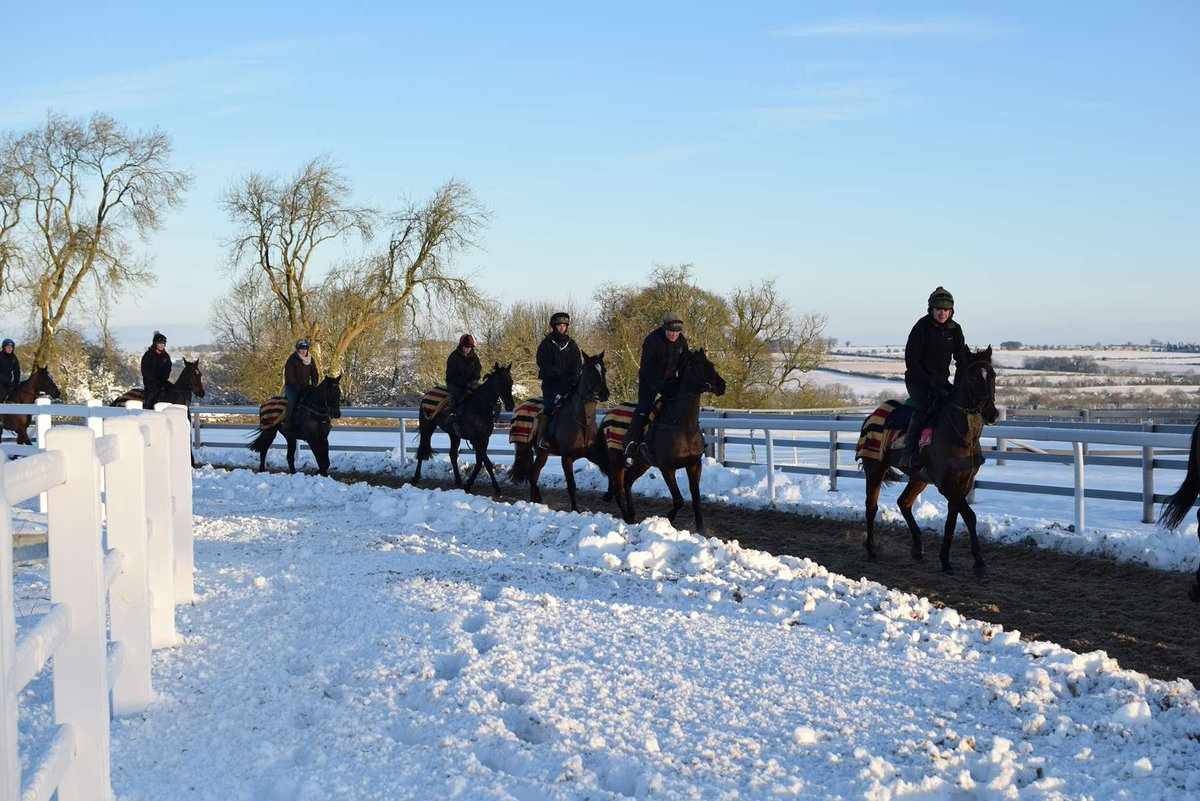 Image result for stable staff snow