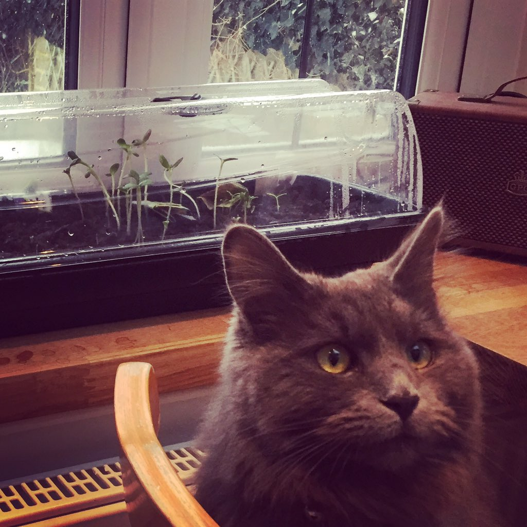 Cutie Guarding The Young Seedlings Growing In Our New Jumbo Heated  Windowsill Propagator   The Perfect Way To Ensure Extreme Weather  Conditions Donu0027t Affect ...
