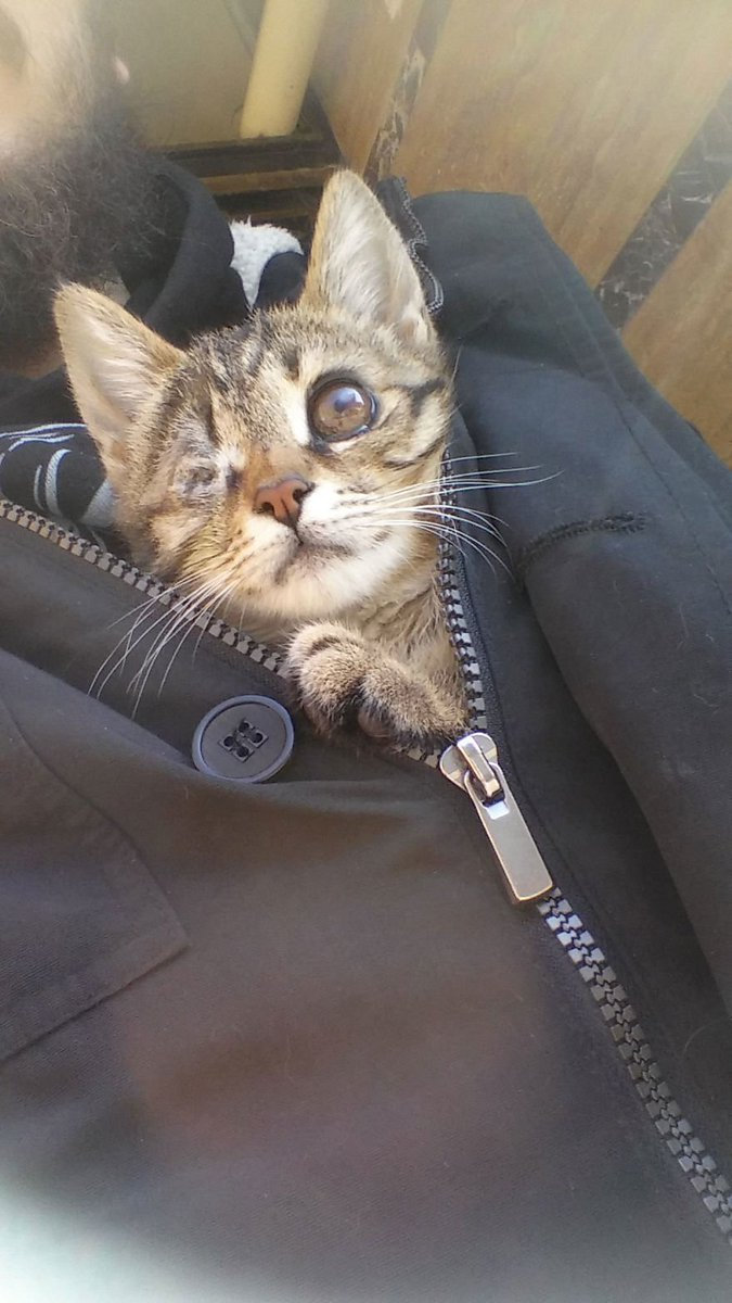 Luv Kittens Daily on Twitter: