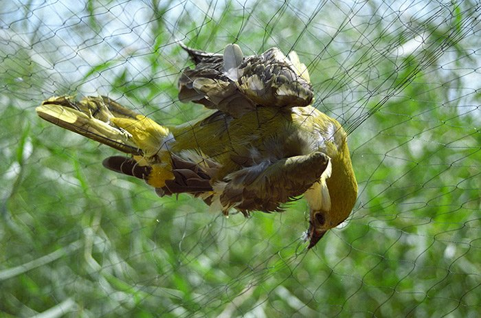 Some better news from #Cyprus, dramatic drop in illegally killed birds on UK Base in Cyprus, well done @Natures_Voice bit.ly/2Ffx3Oc