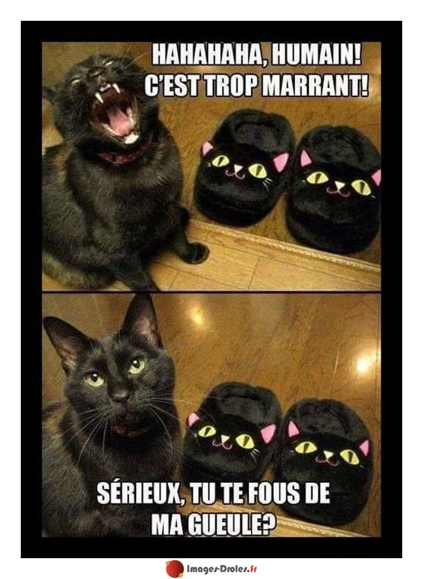 """Images-Droles.fr on Twitter: """"Blague d'humain #humain #chat #blague #humour. Suivez @ImgsDrolesFR…"""