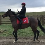 Billy Dylan he's fast -see how fast at the Gallop Racing open day on Saturday  - shares available #jointhegallop