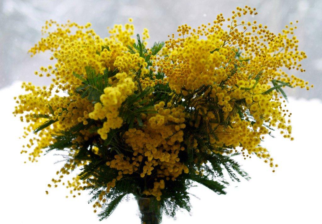 Праздничные цветы на 8 марта желтая ветка, оптом москва центральный
