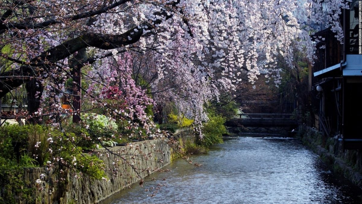 Sakura Or Cherry Blossoms Are One Of The Enduring Symbols Of