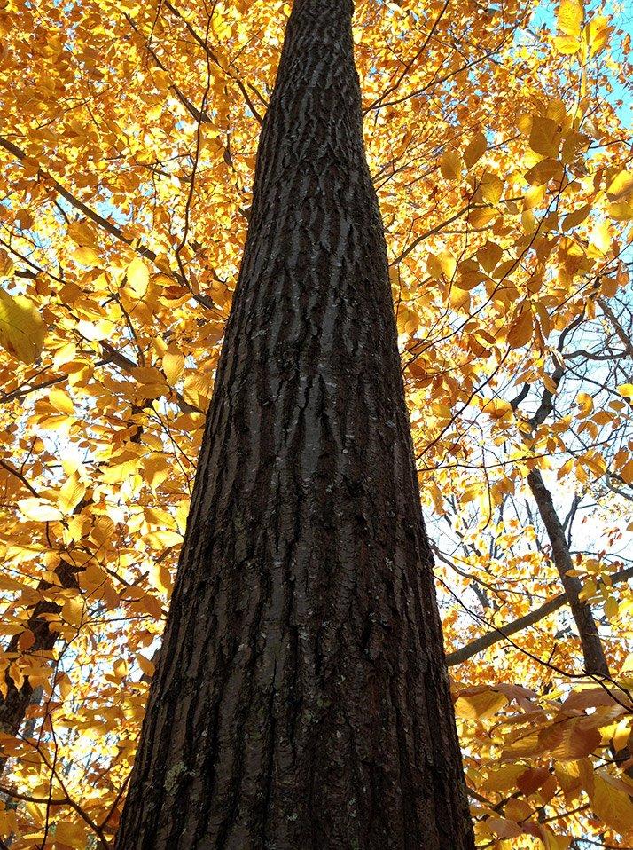 Harvard Forest: Harvard Forest (@HarvardForest)