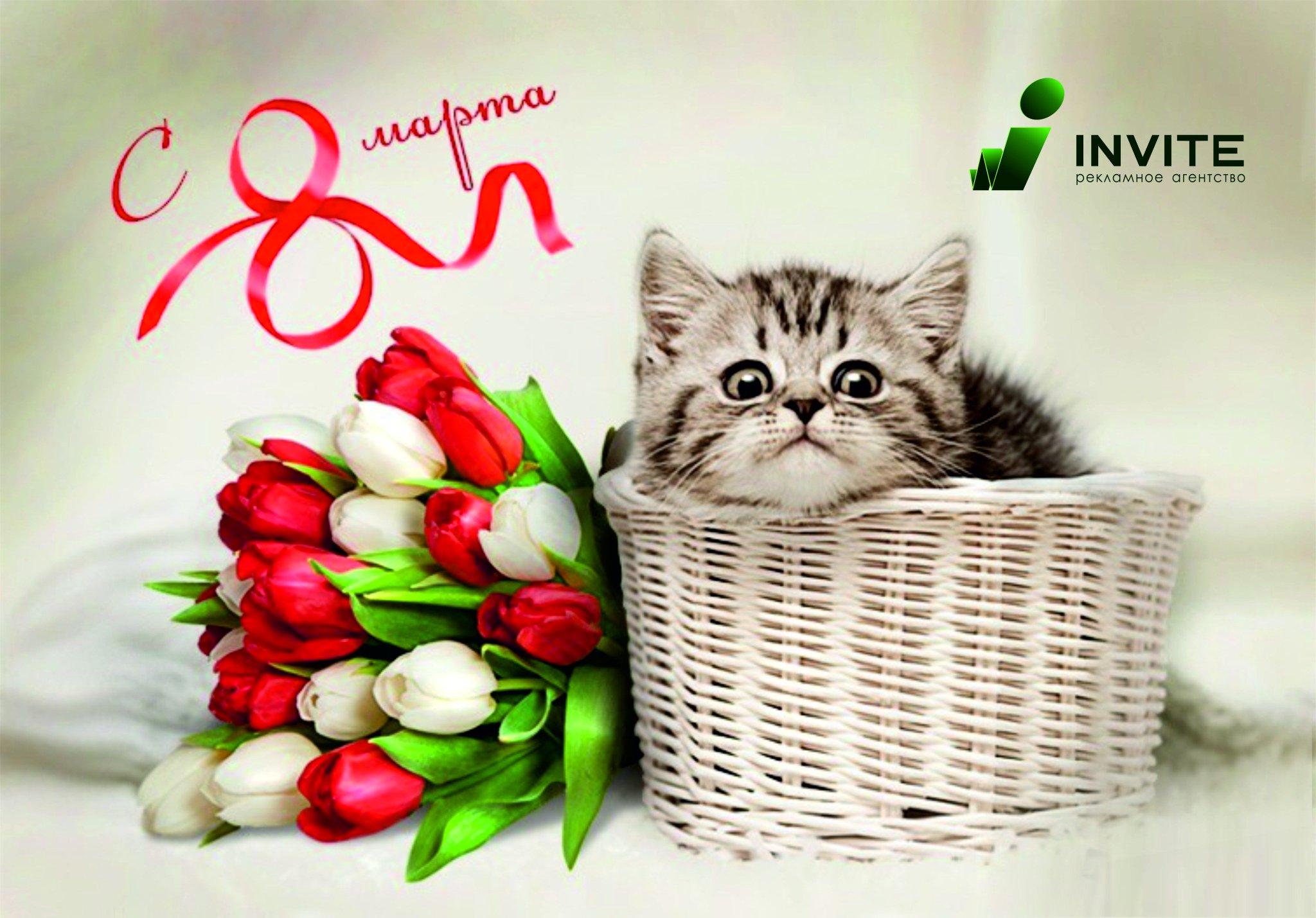 8 марта открытка котенок, картинка новый год
