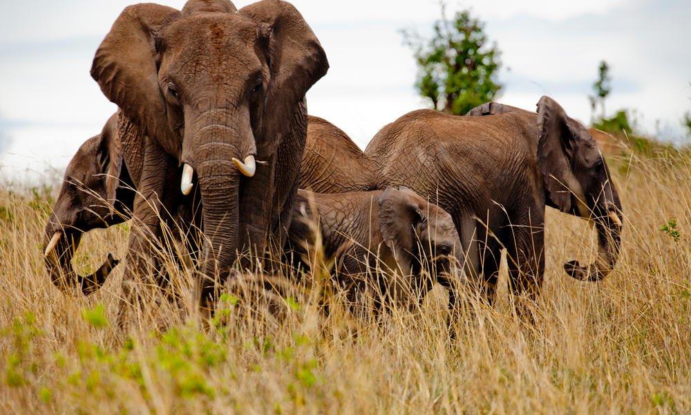 test Twitter Media - BREAKING! Goed nieuws in de strijd tegen wildlife crime. 's Werelds grootste tech bedrijven gaan  samenwerken om de toenemende illegale handel in wilde dieren tegen te gaan. DOEL: 80% afname vd online illegale handel in wildlife in 2020. https://t.co/c4zDdBniNa #stopwildlifecrime https://t.co/4tjkYrvbgT