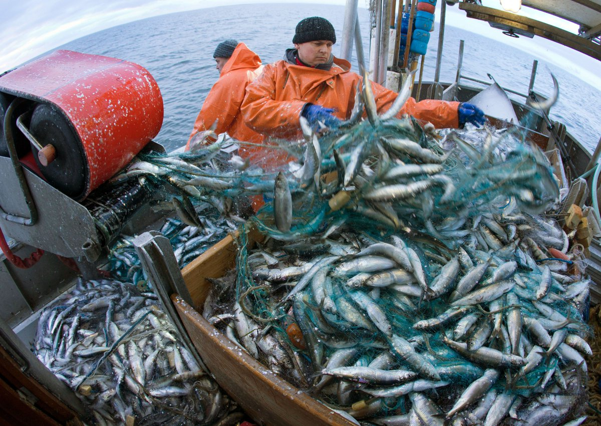 Chancellor Philip Hammond has stated that the government would be open to trading away access to British fish stocks for a better Brexit deal. @NickFerrariLBC asks: is the fishing industry more important than The City?
