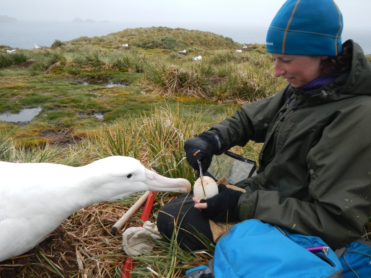In honor of #InternationalWomensDay wed like to share the work some of the amazing women at BirdLife International are doing #internationalwomensday2018 Story> bit.ly/2D7nsD7