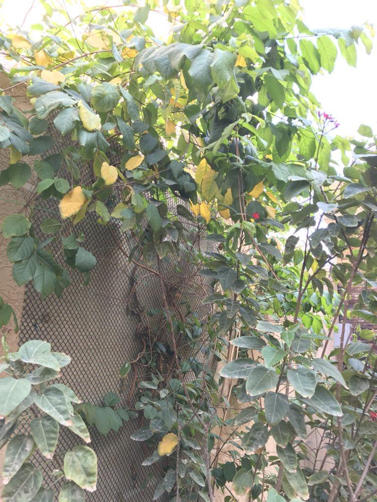 أسباب إصفرار أوراق أشجار 12
