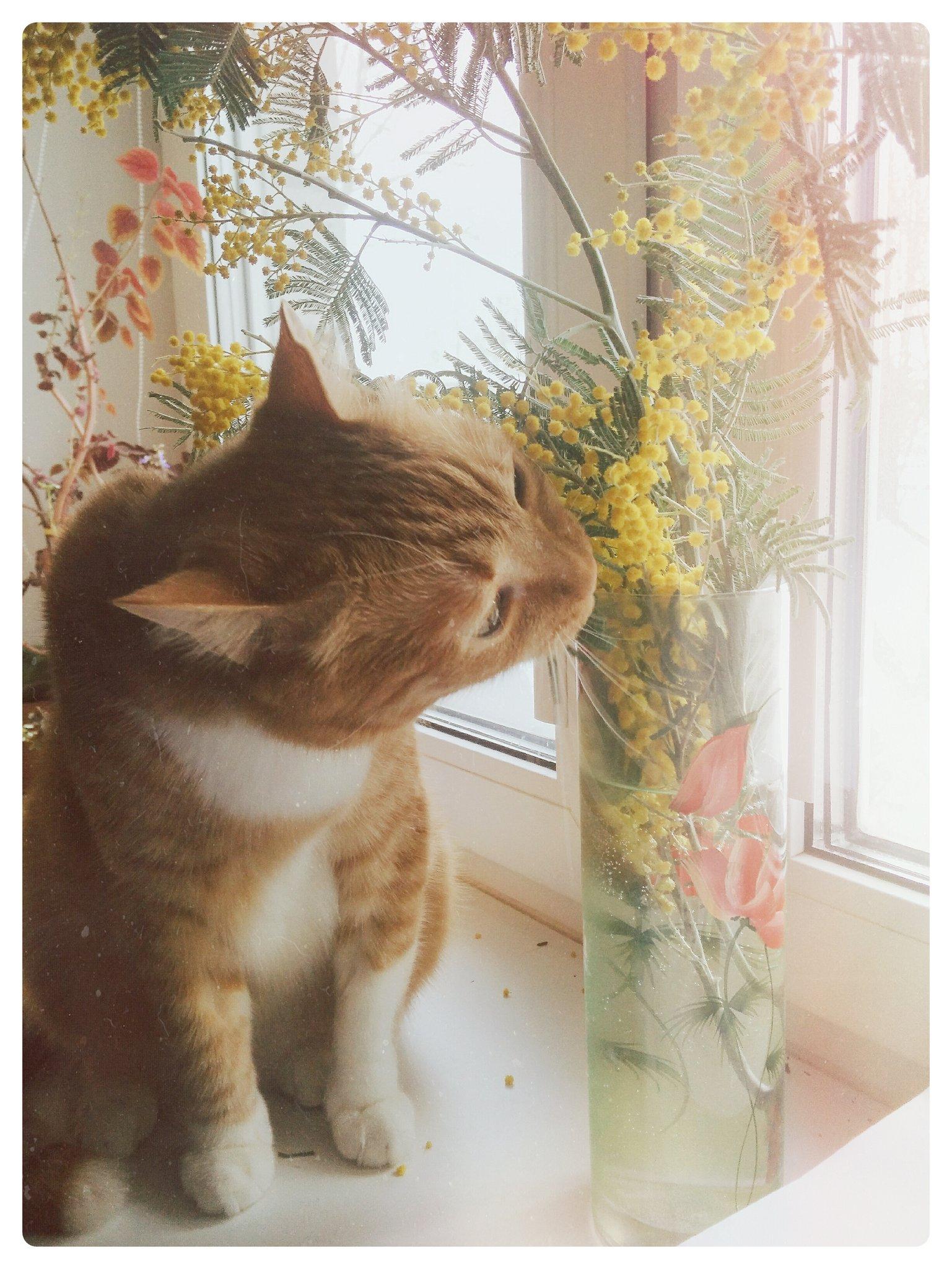 Кот К Весне Похудел. Почему кошка худеет без видимых причин