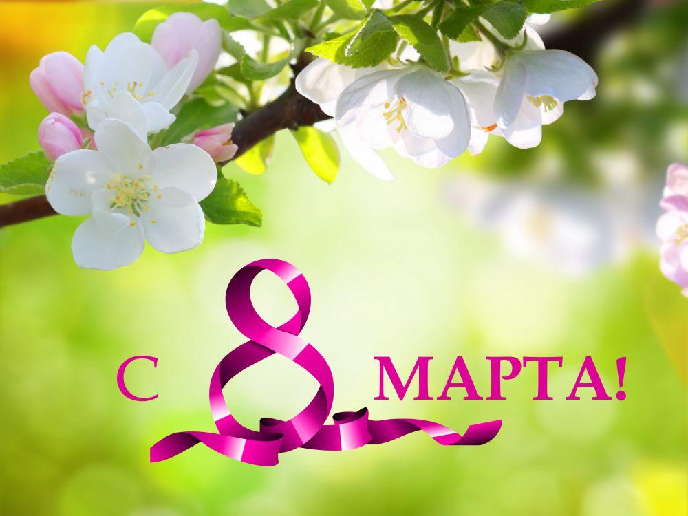 Гвоздика, открытки с 3 марта 2019