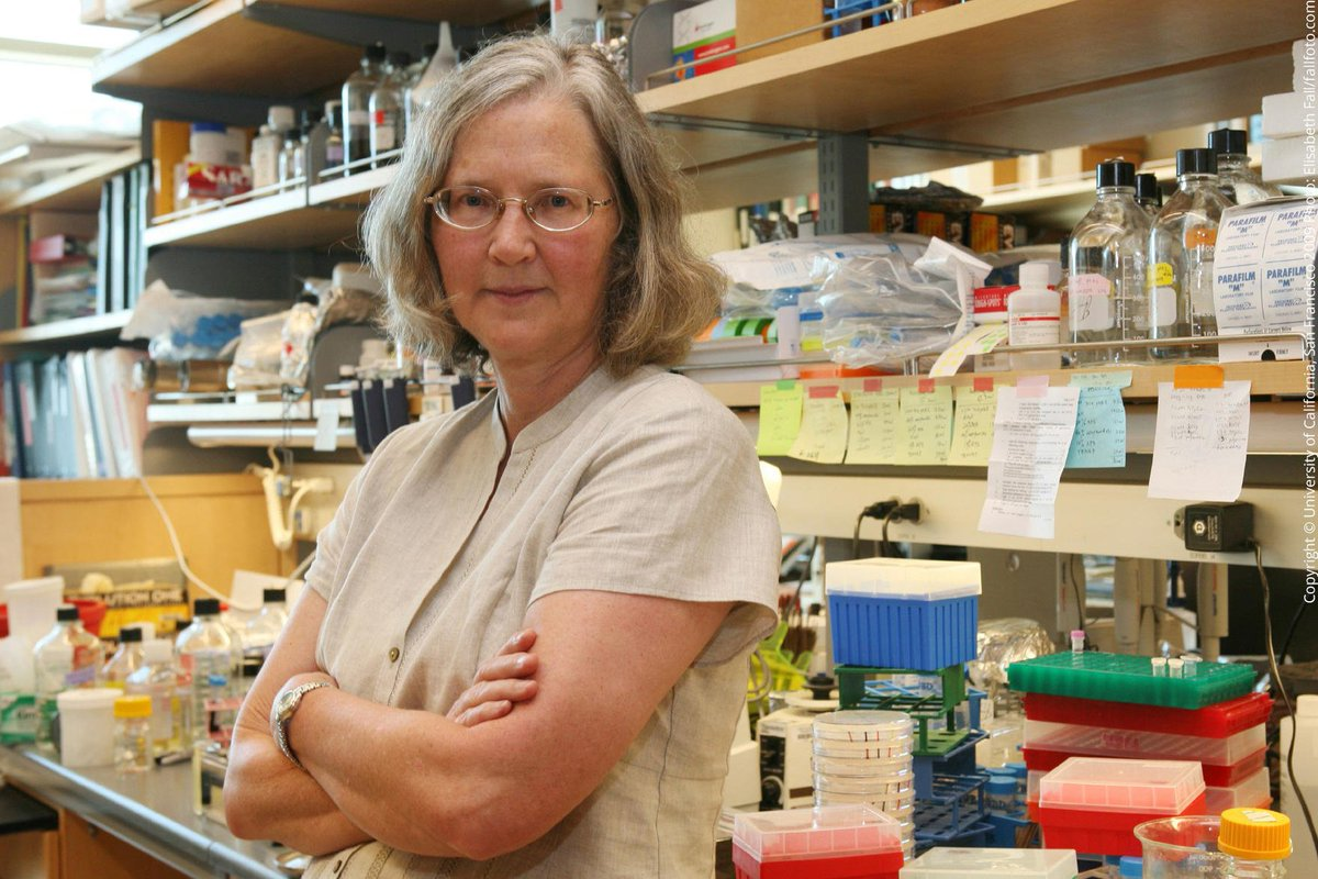 2009 was the first time in #NobelPrize history that a scientific prize was awarded to two women. Elizabeth Blackburn and Carol Greider were awarded the Medicine Prize, alongside Jack Szostak, for discovering telomeres – and the enzyme that forms them – telomerase. #IWD2018