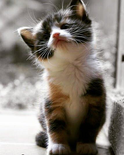 Meow #cat #cats #CatsOfTwitter #catsofinstagram #kitten #Kitty #KittenWorld