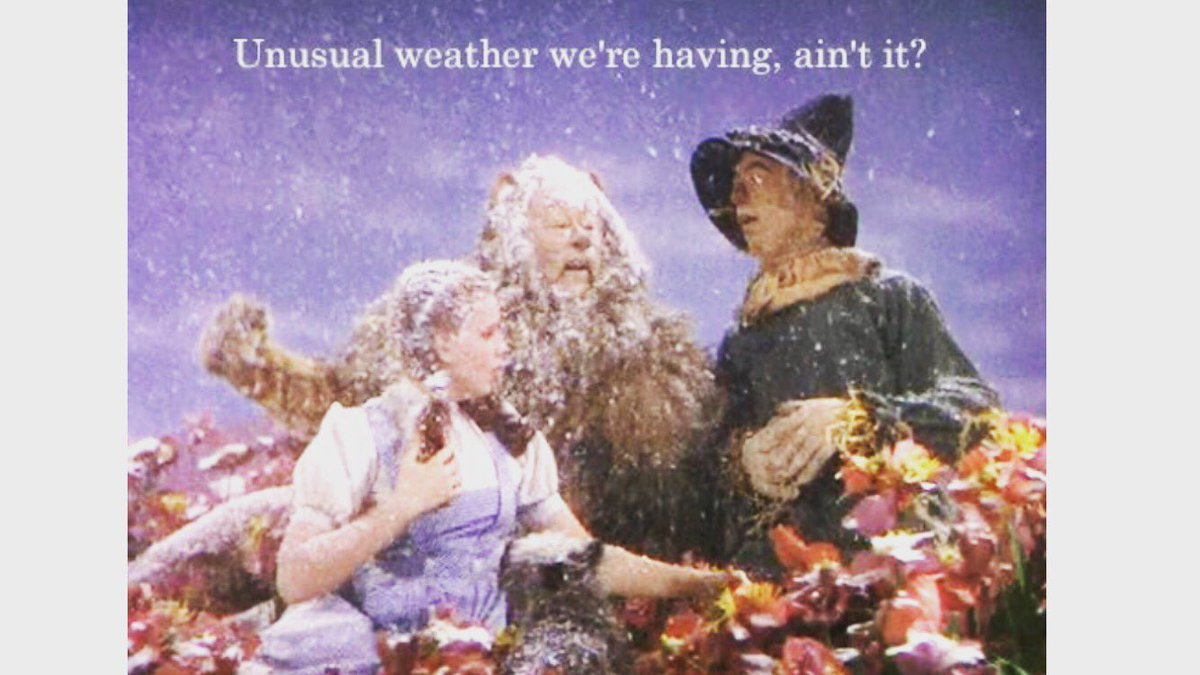 It Was Popular On Film And TV Sets The Snow Even Used In Wizard Of Oz Set Poppy Field Scenepictwitter XNd6HWW670