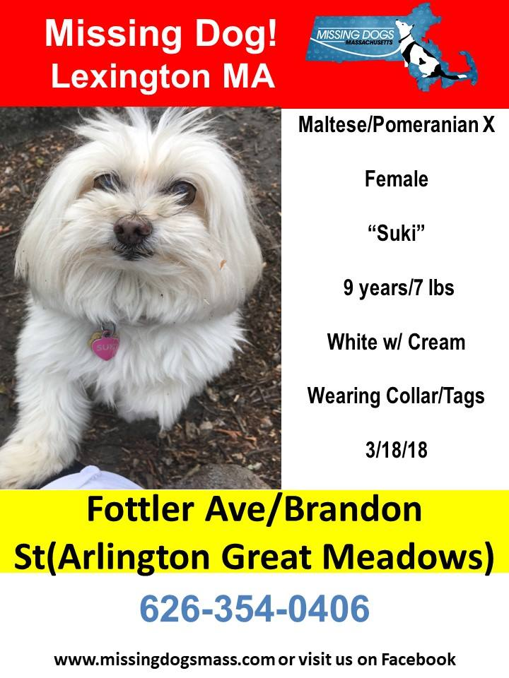 Here's the picture on that missing dog.