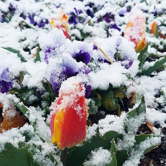 Happy second day of spring, #bizdeacs! . . #mothersnowdear #snowmuch fun #snowon2 #wxii #wghp #triadwx #myws https://t.co/5qMAayolyr