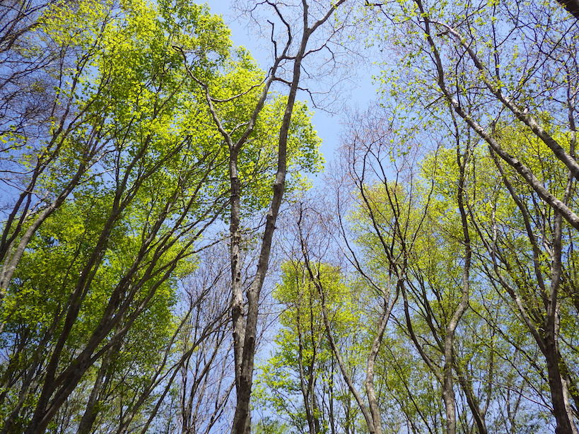 #Internationaldayofforests2018 #Spring #Summer #Fall #Winter in #Fukushima #forests