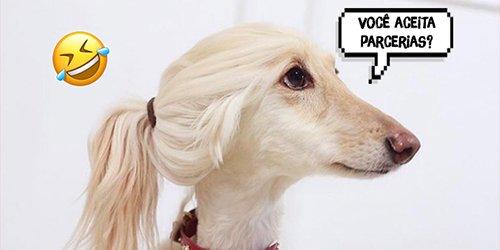 O meme dos cachorros influenciadores digitais já é o melhor do ano! HAHAHAHA https://t.co/2xzPI8AxEl #LoveTwitter