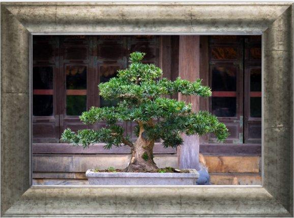 Bonsai Tree Fine Art Bonsaifine Twitter