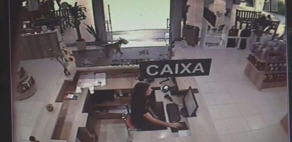 VÍDEO: Cachorro 'furta' livro de Elena Ferrante em universidade no Rio Grande do Sul https://t.co/txEgozEXWn