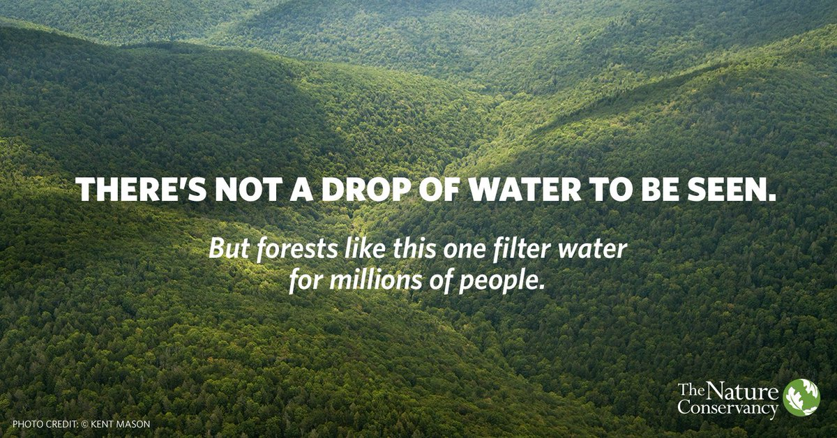 Your water comes from somewhere. Somewhere worth protecting. Happy #IntlForestDay today and #WorldWaterDay tomorrow!