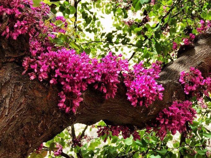 """Her yara bir gün çiçek açar.  """"rabb'in h..."""