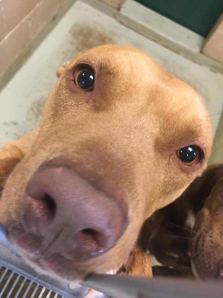 City Of Lubbock On Twitter The Lubbock Animal Shelter Adoption
