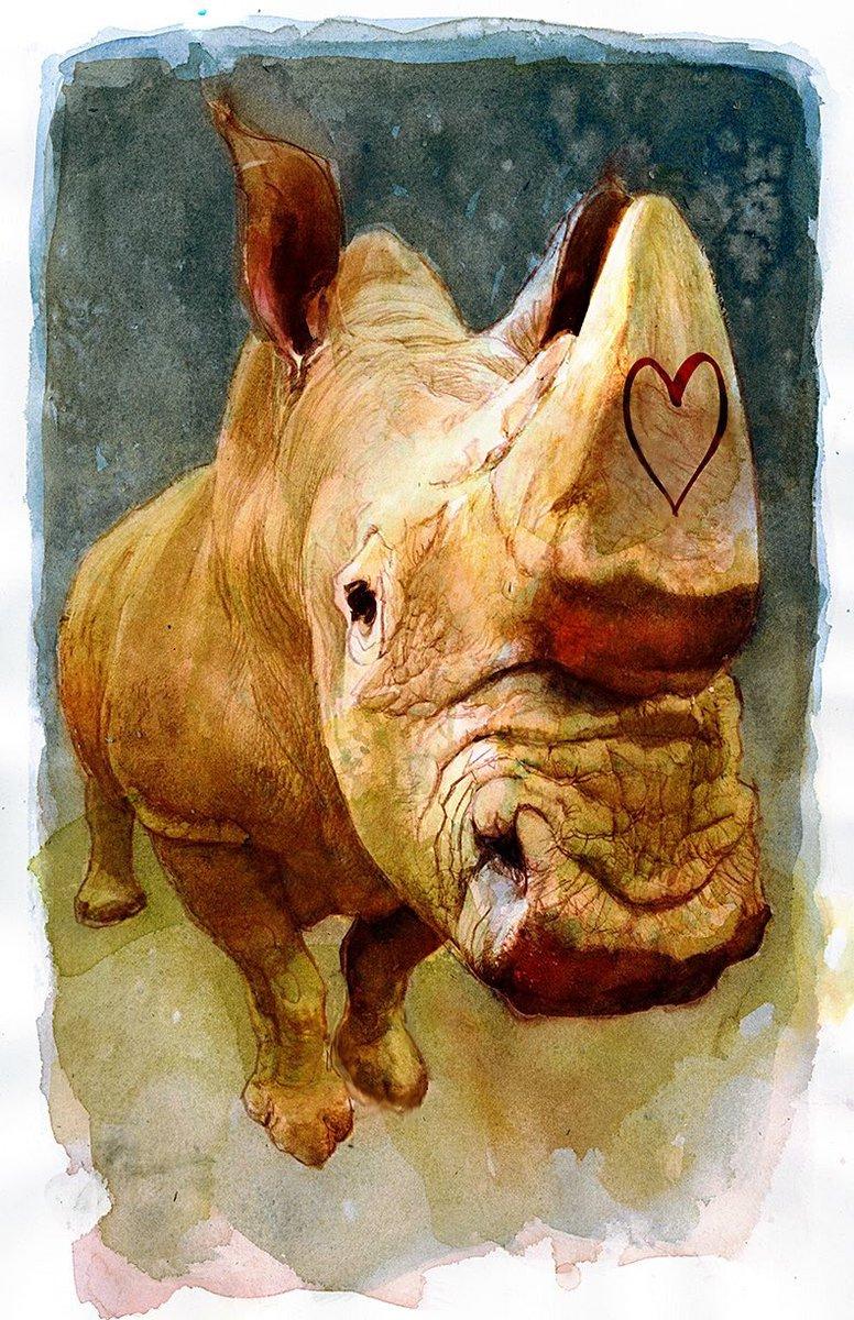 #SudanForever #Sudan #rhinos #SavetheRhino @sinKEVitch