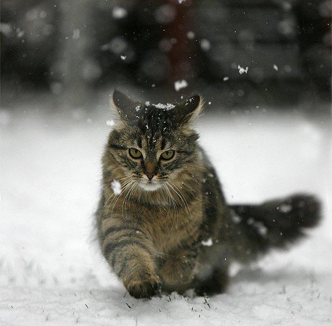верхом фото скоро снег одним самых выразительных
