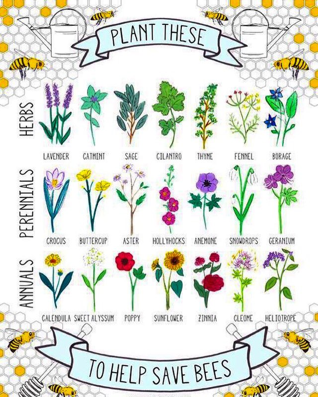 To Plant Their Gardens Since Bees Are In Big Danger We Need Them Survive All Help Spring Garden Nature Plants Endangered