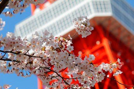 東京は天気が良くなってきましたね! 週末はお花見日和かな✨ 今年もタワーと桜の良い感じの写真を撮影できるといいな~🌸