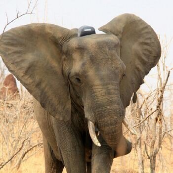 Thank you to our https://t.co/lyadz24p2X sister company @G3Gnews for spreading the word! Please follow @elephantsrhinos to stay current w/  #ERP #conservation efforts! @SAP @successfactors @SAPInMemory #SAPInnovations4Good @AshleyTully2